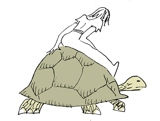 tortoisecol