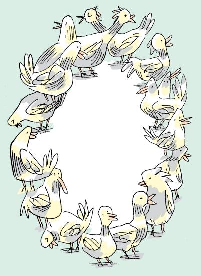 bird-circle
